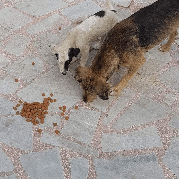 Help Bulgaria Street Cats and Dogs
