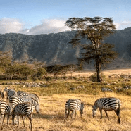 True Adventure Tanzania 2020 - Ferdinand Zemplen