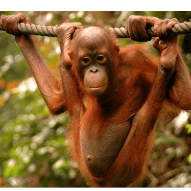 Outlook Expeditions Borneo 2019 - Caitlin Welsby