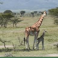 Kenya 2019 - Cecilia Sladden