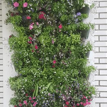 Greening Willesden Green