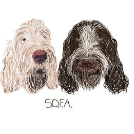 Spinone Overseas for Adoption