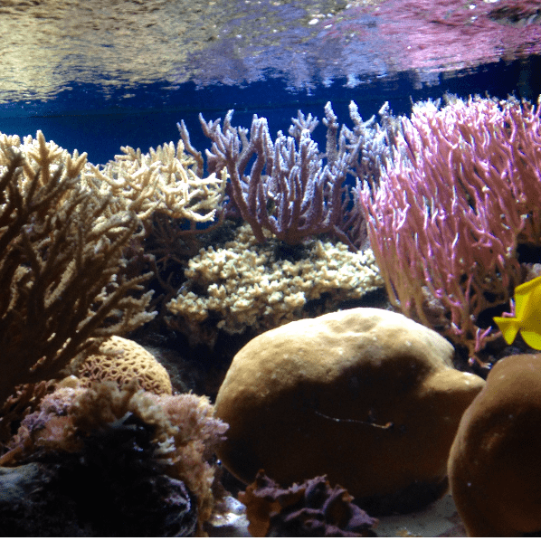 University of Essex Coral Research Project 2017 - Keith Dixon