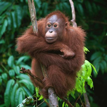 World Challenge Borneo 2021 - Alyson Roberts