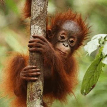 Borneo 2019 - Isabel Madronal