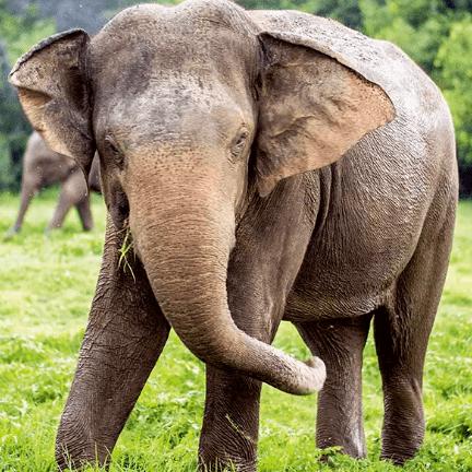 Sri Lanka 2019 Sport Trip - Romy Maywood