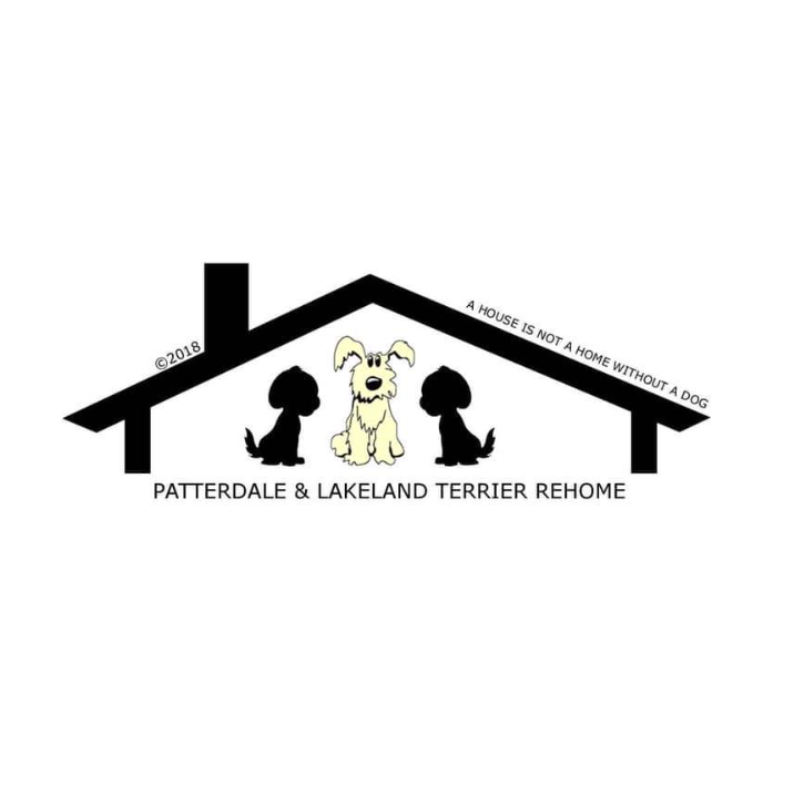 Patterdale and Lakeland Terrier Rehome UK