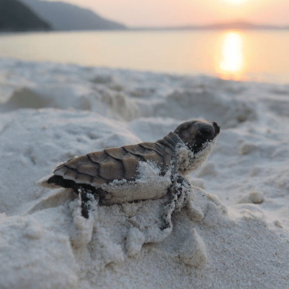 Malaysia 2019 - Samantha Crumley