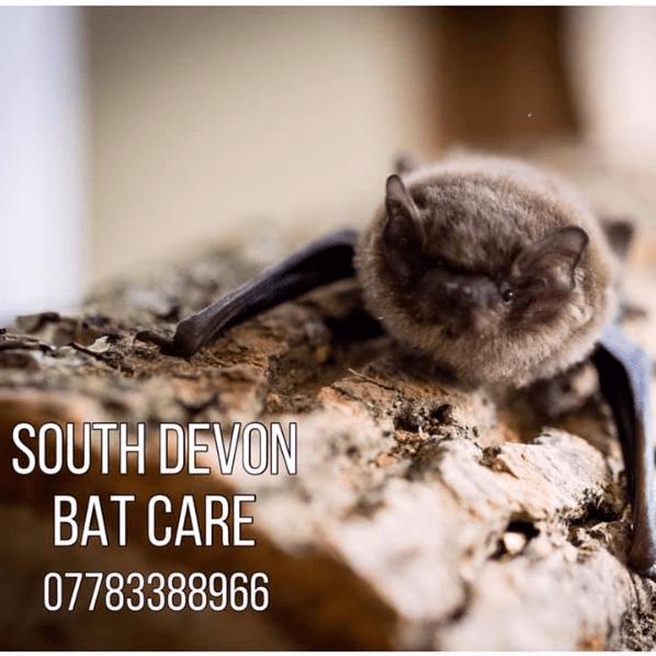 South Devon Bat Care
