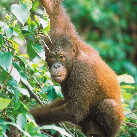 Borneo 2021 - Holly Paynter