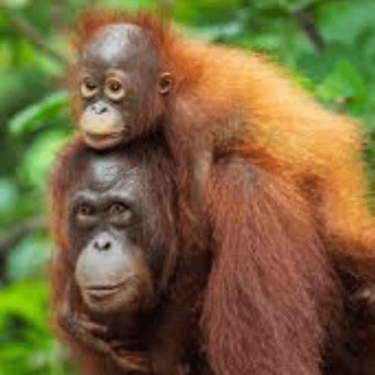 Borneo 2021 - Teddy Waning