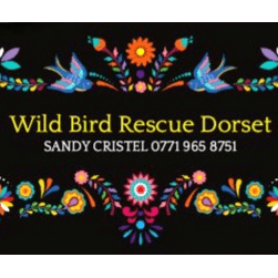 Wild Bird Rescue Dorset