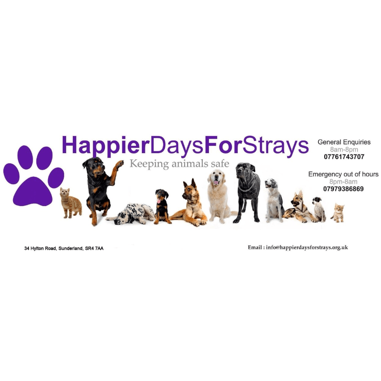 Happier Days For Strays