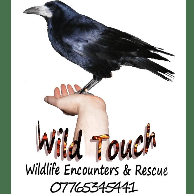 Wild Touch