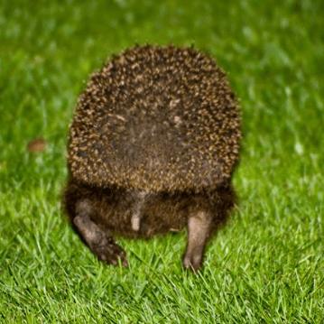 Charlies Hedgehog Care