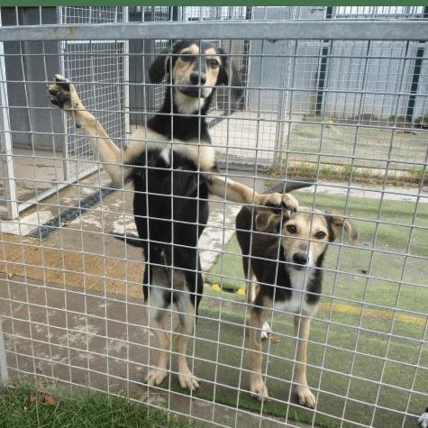 Halfway Home Dog Rescue - Newark