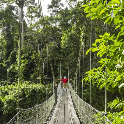 Borneo 2020 - Katie Ritter