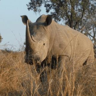 Operation Wallacea South Africa 2019 - Hannah Walker