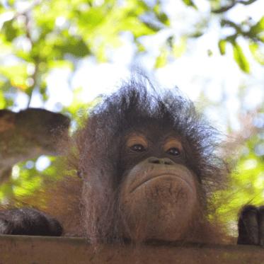 Global Action Borneo 2021 - Meg Luddington