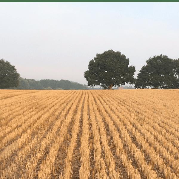 DORMANT: Martley Young Farmers
