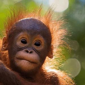 World Challenge Borneo 2020 - Freya Urwin