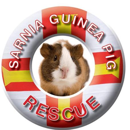 Sarnia Guinea Pig Rescue