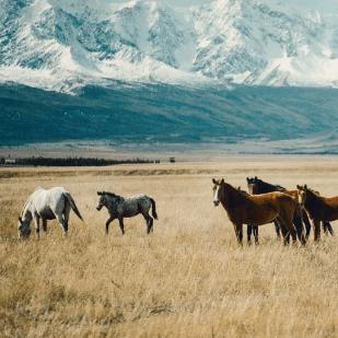 World Challenge Mongolia 2019 - Amethyst Maxwell-Billing