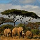 Kenya 2019 - Luisa Butchart