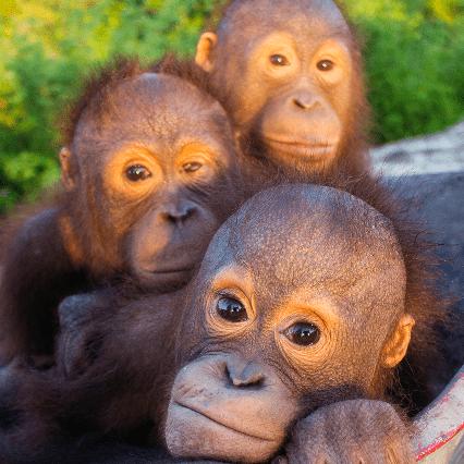 Sumatra 2020 - Rian Grindley