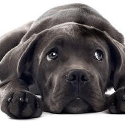 Birch Hill Dog Rescue