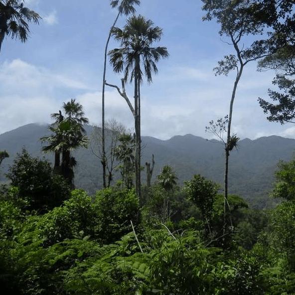 Operation Wallacea Honduras 2019 - Lizzie Raymont