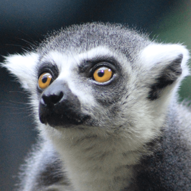Outlook Expeditions - Madagascar 2019 - Molly Blyth
