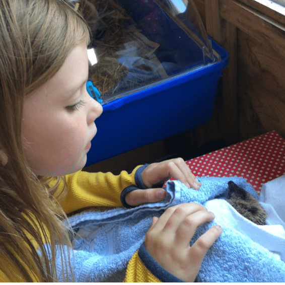 Hedgepigs and Hoglets Rescue