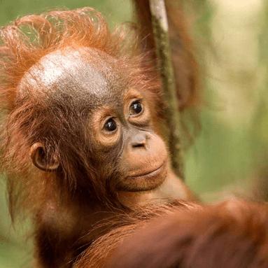 Camps International Borneo 2020 - Yana Rachkova