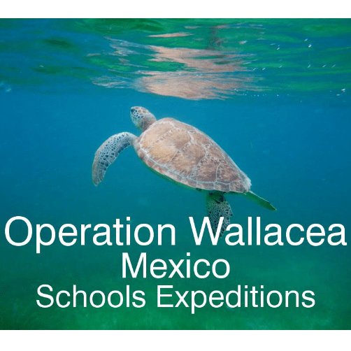 Operation Wallacea Mexico 2019 - Grace Ewing