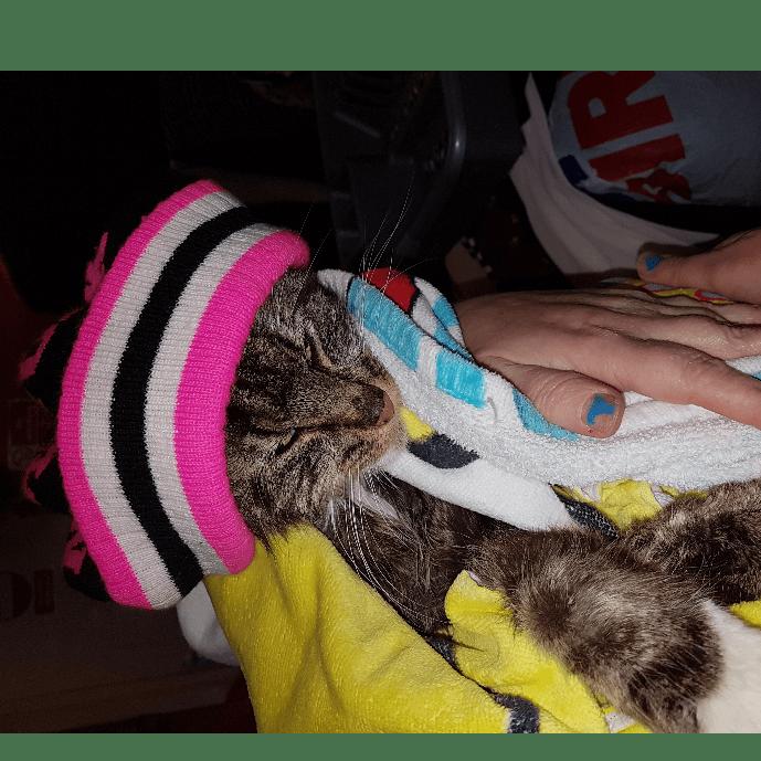 Animal Aid liverpool  Christmas fund