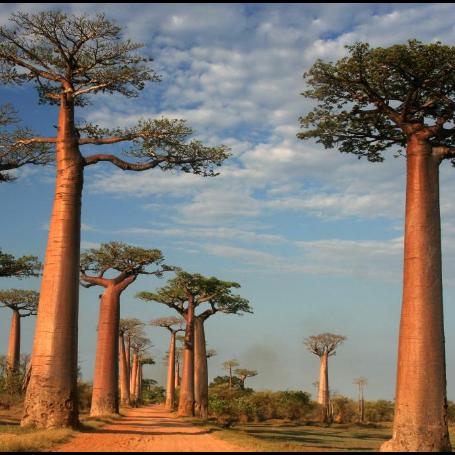 Madagascar 2021 - Jack Roberts