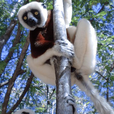 Operation Wallacea Madagascar 2017 - Alice Williams