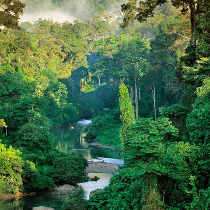 Borneo 2020 - Finn Armitt