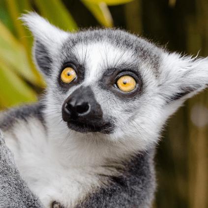 World Challenge Madagascar 2020 - Ben Mackay