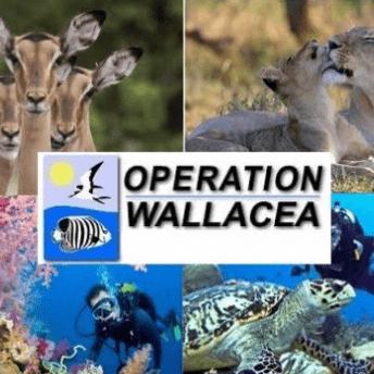 Operation Wallacea Honduras 2019 - Frankie Noades
