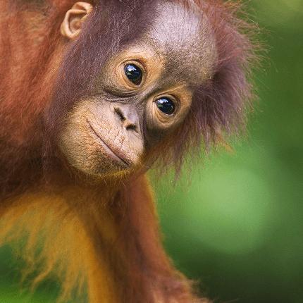 Camps international Borneo 2021 - Dora Lourenço