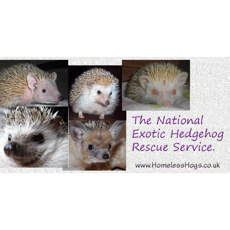 National Exotic Hedgehog Rescue