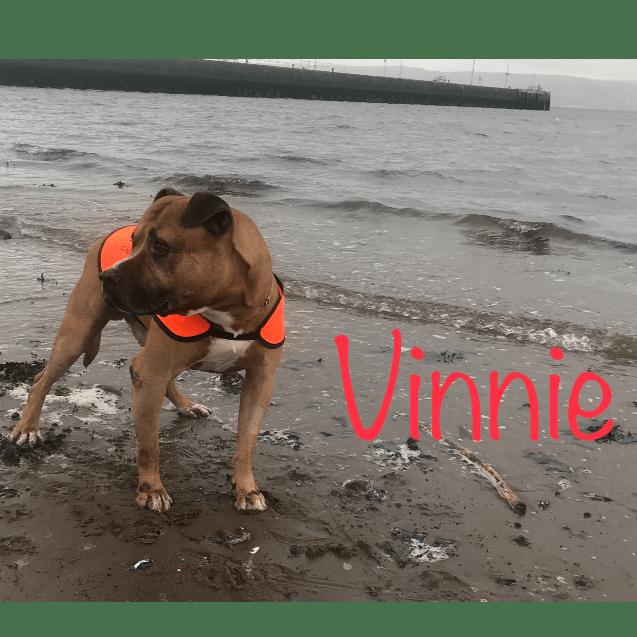 Cleo's Mutley Crew Dog Rescue