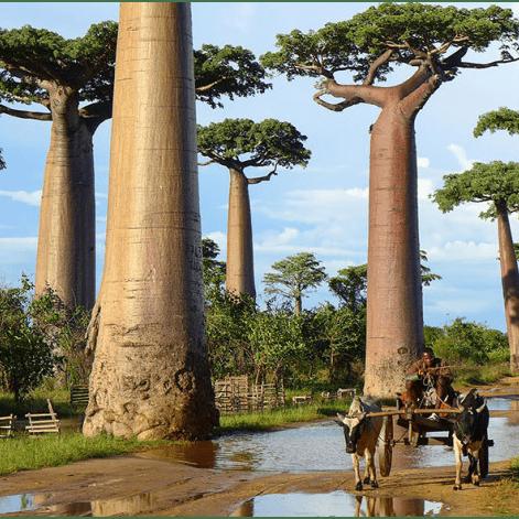 Outlook Expeditions Madagascar 2019 - Nikita Murray