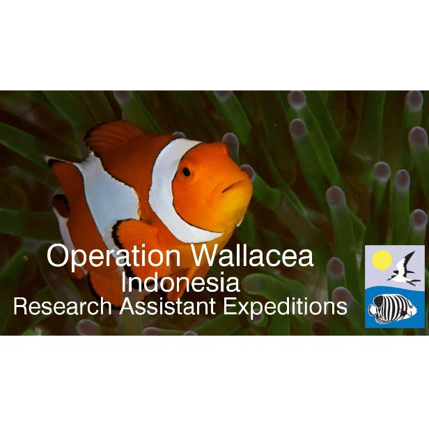 Operation Wallacea Indonesia 2018 - Madeleine O'Connor
