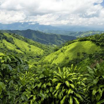 Costa Rica 2020 - Molly Maher