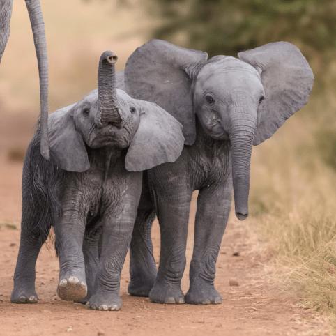 Elephant and Rhino Sanctuary volunteering 2020 - Lauren Williams