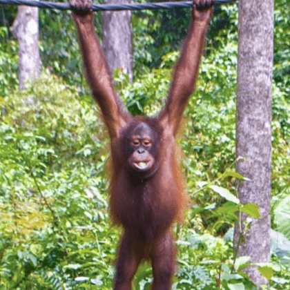 Camps International  Borneo 2021  - Grace Lee