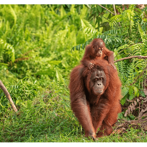 Borneo 2021 - Libby Barber